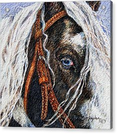 A Gypsy's Blue Eye Acrylic Print