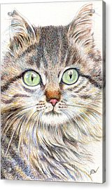A Handsome Cat  Acrylic Print