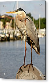 A Heron In The Marina Acrylic Print