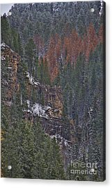 A Hint Of Brown Acrylic Print