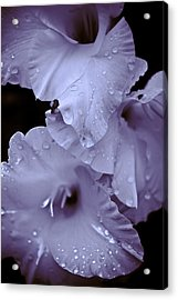 A Hint Of Purple Acrylic Print by Peggie Strachan