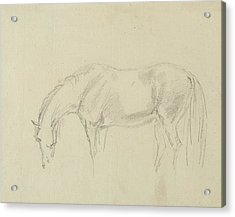 A Horse Grazing  Acrylic Print