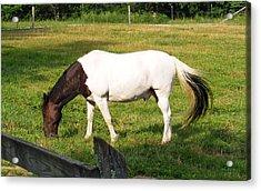 A Horse Named Dipstick Acrylic Print