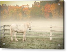 A Horse With No Name Acrylic Print by K Hines