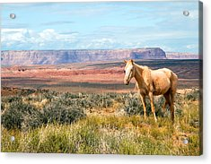 A Horse With No Name Acrylic Print
