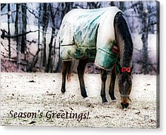 Acrylic Print featuring the photograph A Horse's Season's Greeting Card by Polly Peacock