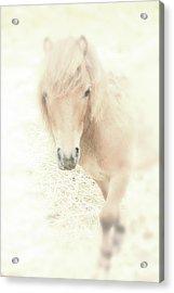 A Horse's Spirit Acrylic Print by Karol Livote