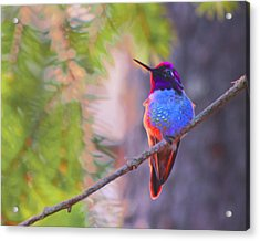 Acrylic Print featuring the digital art A Hummingbird Resting In The Evening Light. by Timothy Hack