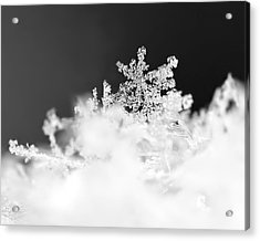 A Jewel Of A Snowflake Acrylic Print by Rona Black