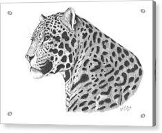 A Leopard's Watchful Eye Acrylic Print by Patricia Hiltz
