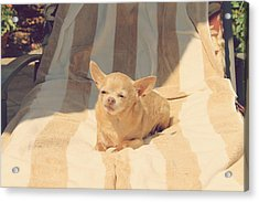 A Life Of Leisure Acrylic Print by Laurie Search