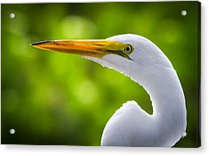 A Lighter Version Of A Snowy Egret Acrylic Print by Andres Leon