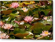 A Lily Carpet Acrylic Print