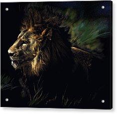 A Lion #1 Acrylic Print