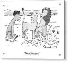 A Lion Cub Speaks To His Parent Lions Acrylic Print