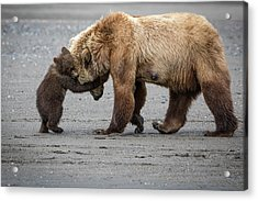 A Little Bear Hug Acrylic Print