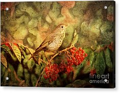 A Little Bird With Plumage Brown Acrylic Print