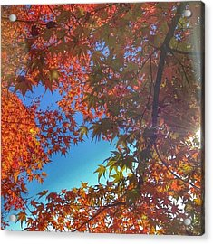 A Little Bit Of Sunshine On A Fall Acrylic Print