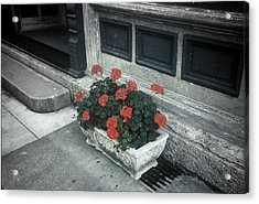 Acrylic Print featuring the photograph A Little Color In A Drab World by Rodney Lee Williams