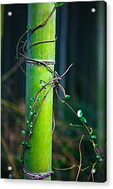 Acrylic Print featuring the photograph A Little Help From A Friend by Brad Brizek