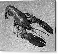 A Lobster From Maine Acrylic Print by Dana B. Merrill