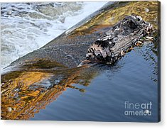 A Log Jams The Dam Acrylic Print by Ilene Hoffman