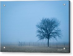Acrylic Print featuring the photograph A Lone Tree In The Fog by David Perry Lawrence