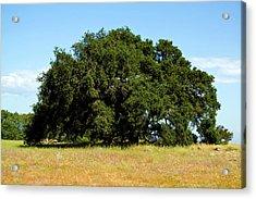 A Lone Tree Acrylic Print by Terry Thomas