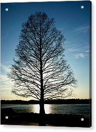 A Lonely Tree Acrylic Print by Lucy D