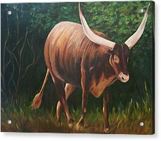 A Lot Of Bull, Watusi  Acrylic Print