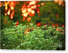 A Love Bug Sunset Acrylic Print