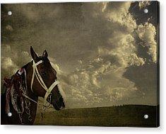 A Lovely Horse Acrylic Print