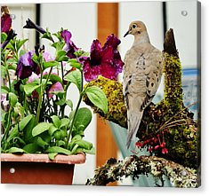 Acrylic Print featuring the photograph A Lovely Morning by VLee Watson