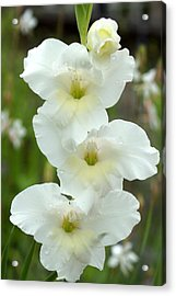 A Lovely White With A Hint Of Yellow Gladiolus Acrylic Print by Kim Pate