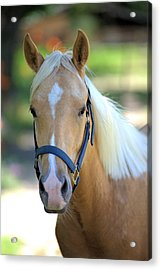 Acrylic Print featuring the photograph A Loyal Friend by Gordon Elwell