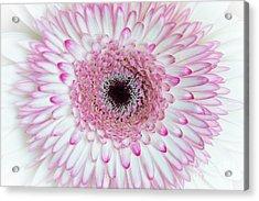 A Million Petals Acrylic Print