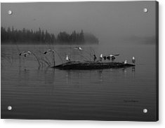 A Misty Greeting  Acrylic Print by Steven Clipperton