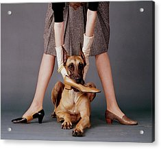 A Model With A Dog Holding A Shoe In Its Mouth Acrylic Print by John Rawlings