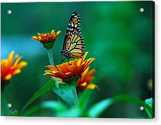 Acrylic Print featuring the photograph A Monarch by Raymond Salani III