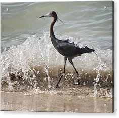 A Morning Stroll Interrupted Acrylic Print by Gary Slawsky