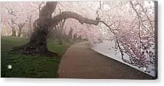 A Morning To Remember Acrylic Print by Bernard Chen