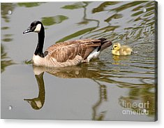 A Mother's Love Acrylic Print by Bob and Jan Shriner