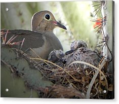 Acrylic Print featuring the photograph A Mothers' Love by Deb Halloran