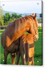Acrylic Print featuring the photograph A Mother's Love by Suzanne Oesterling