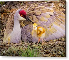 A Mother's Lovely Touch Acrylic Print by Zina Stromberg