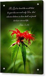 A Mountain Flower  John 3 16 Acrylic Print by Randall Branham