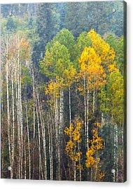 A Muted Fall Acrylic Print by Rick Furmanek