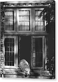 A Nap In The Sun Bw Acrylic Print