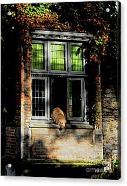 A Nap In The Sun Acrylic Print
