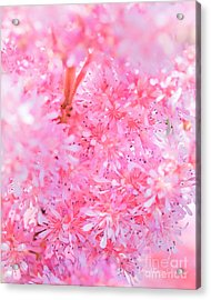 A Natural Pink Bouquet Acrylic Print